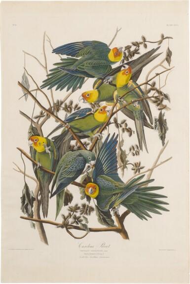 View 1. Thumbnail of Lot 488. Carolina Parrot (Plate 26).