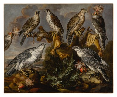 View 1. Thumbnail of Lot 532. A group of seven Lanner and Peregrine or Gyrfalcons.