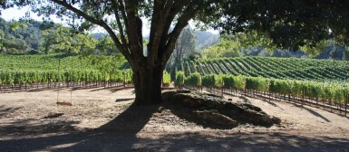 Napa Valley Tour, Tasting & Lunch at Kelly Fleming Wines