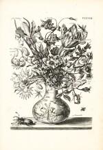 Merian | [Plantes et Insectes de L'Europe, c.1750]