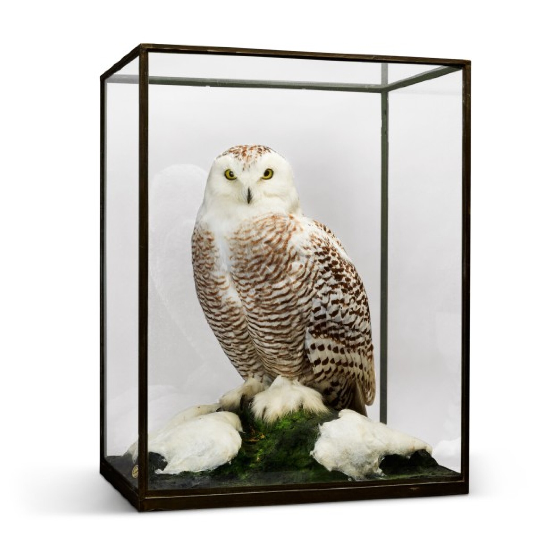 View full screen - View 1 of Lot 20. Rowland Ward, London, 1857-1975 | Snowy Owl.