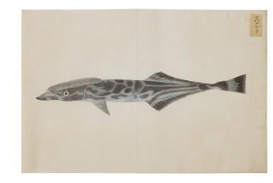 View 14. Thumbnail of Lot 118. ATTRIBUTED TO KAWAHARA KEIGA (1786–1860) STUDIO, EDO PERIOD, 19TH CENTURY, A GROUP OF TWENTY-FOUR FISH.