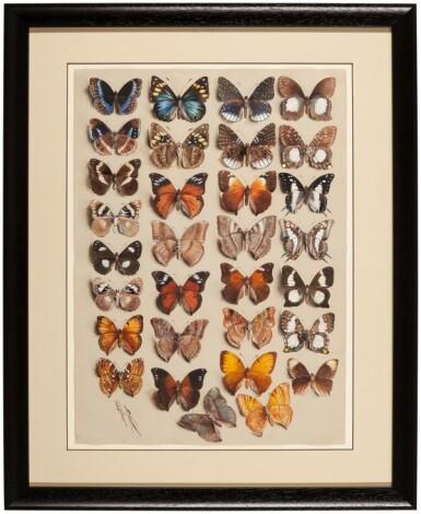 View 5. Thumbnail of Lot 11. Marian Ellis Rowan, 1848-1922 | Two Studies of Butterflies - New Guinea & Australia.