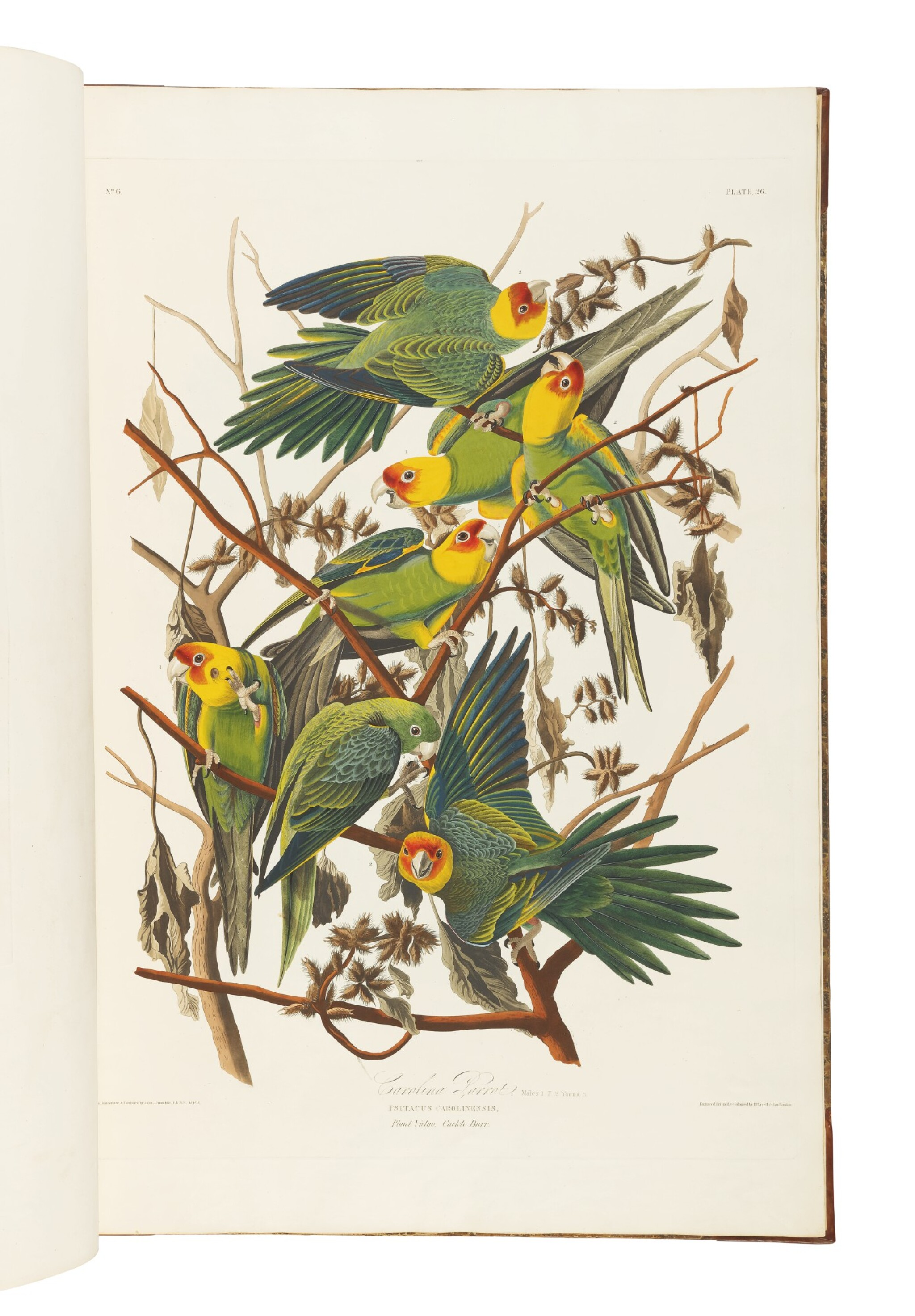 View full screen - View 1 of Lot 250. JOHN JAMES AUDUBON | The Birds of America; from Original Drawings by John James Audubon. London: Published by the Author, 1827–1838.