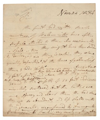 View 1. Thumbnail of Lot 1. Mary Anning | Autograph letter signed, to William Buckland, 24 November 1834.