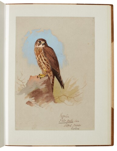 View 8. Thumbnail of Lot 33. Archibald Thorburn | An album containing eight original drawings of birds of prey.