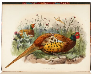 View 4. Thumbnail of Lot 31. ELLIOT, D.G.   A Monograph of the Phasianidae, New York 1870-1872, 2 volumes.