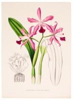 Linden, Pescatorea | Iconographie des Orchidées, 1854-1860