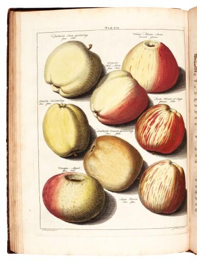 View 1. Thumbnail of Lot 24. Knoop | Pomologia, Fructologia, Dendrologia, 1758-1763, 3 volumes.
