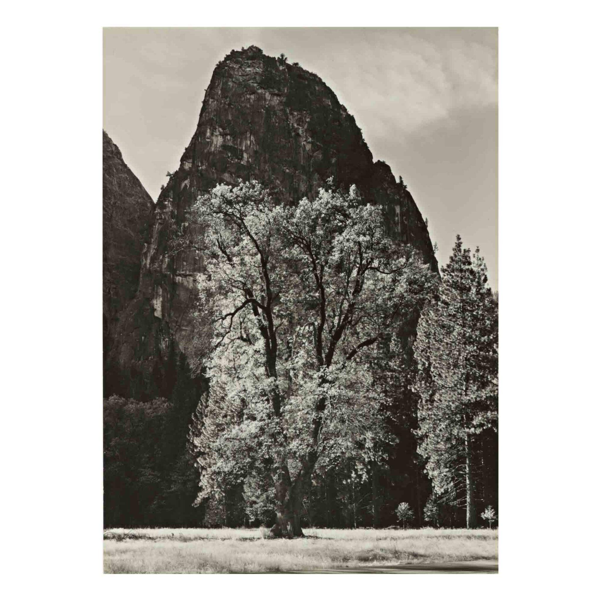 View full screen - View 1 of Lot 82. Oak Tree, Autumn, Yosemite Valley, CA.