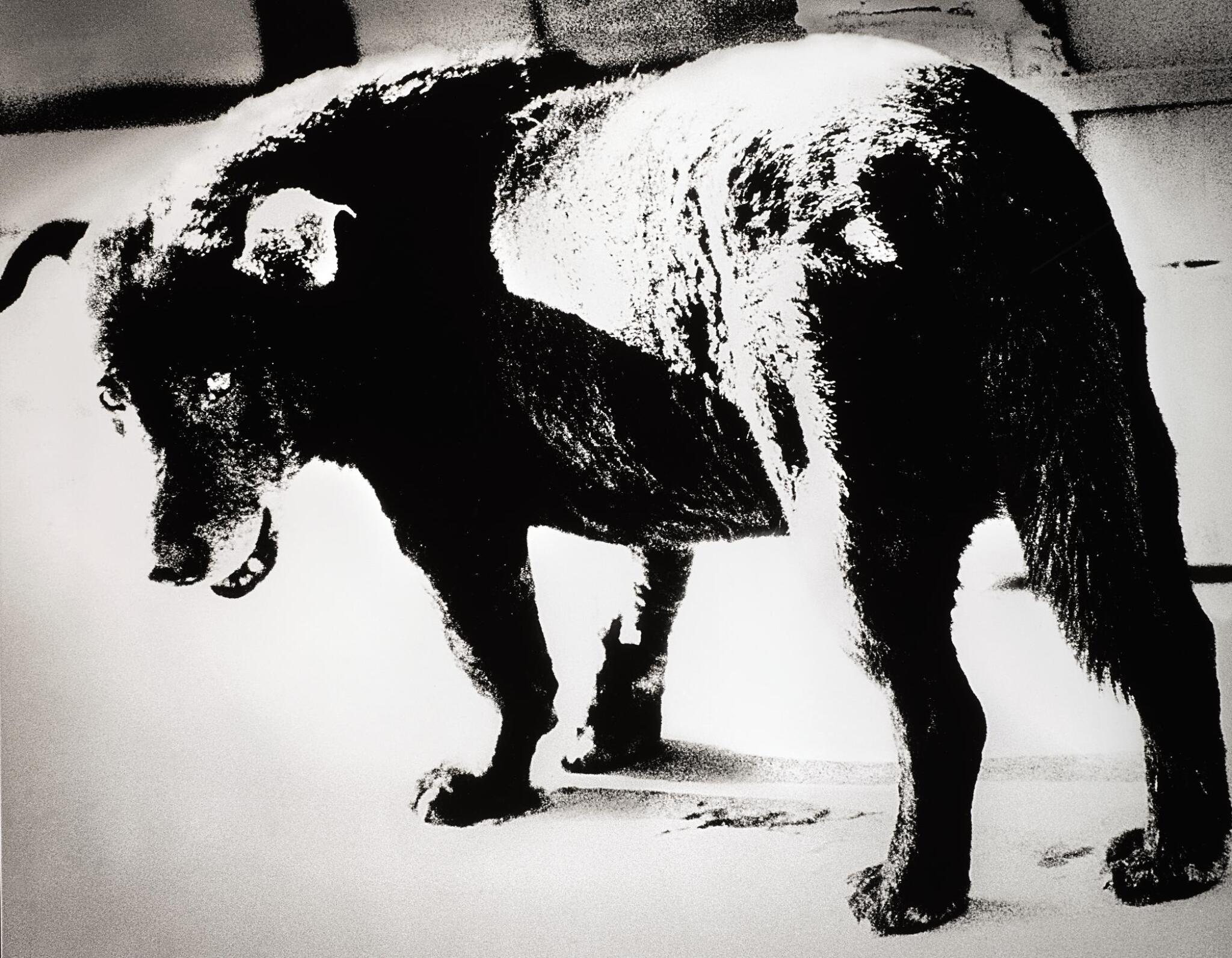 View full screen - View 1 of Lot 74. DAIDO MORIYAMA | 'STRAY DOG, MISAWA', 1971.