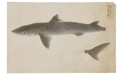 View 23. Thumbnail of Lot 118. ATTRIBUTED TO KAWAHARA KEIGA (1786–1860) STUDIO, EDO PERIOD, 19TH CENTURY, A GROUP OF TWENTY-FOUR FISH.