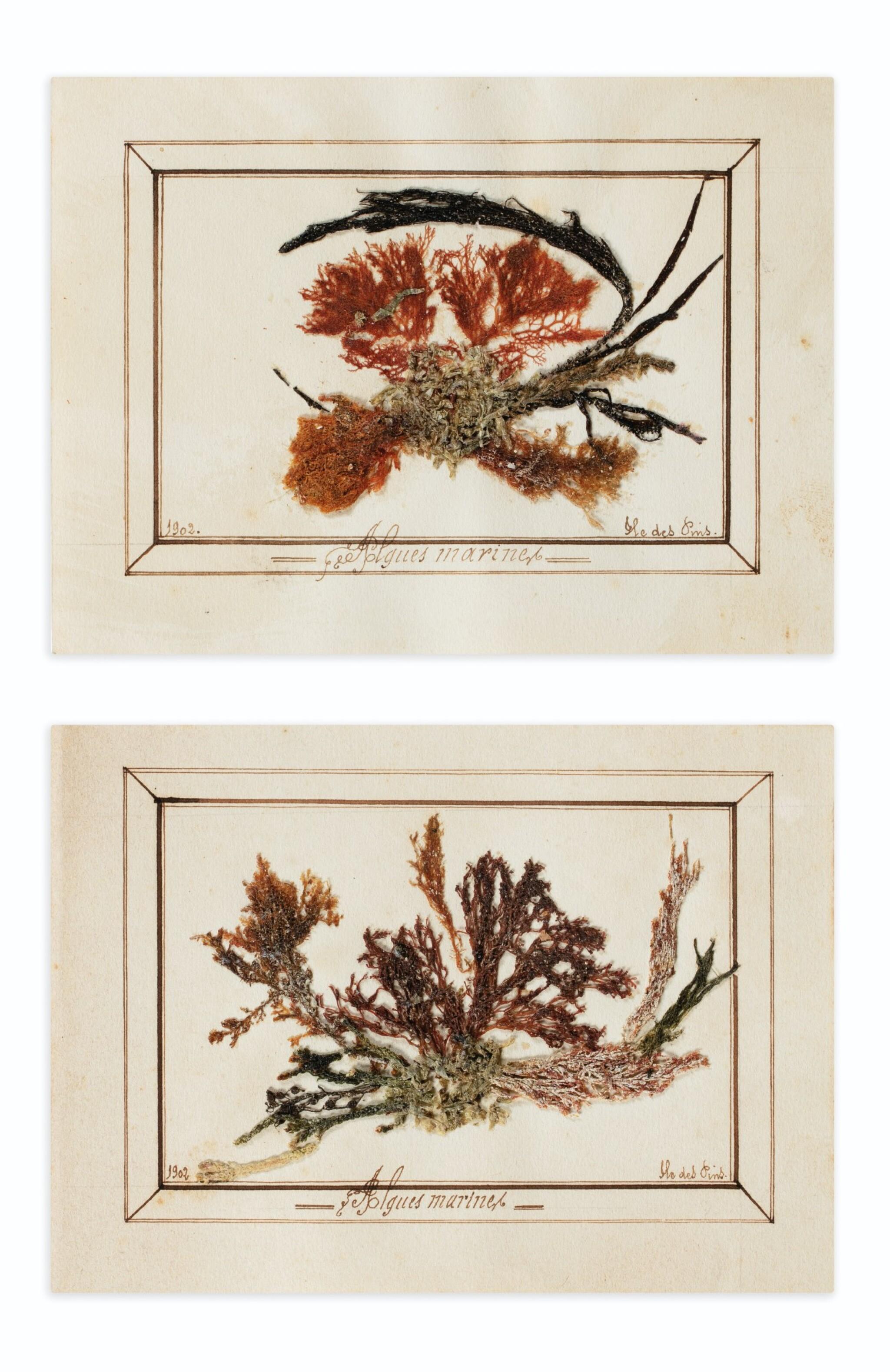 View full screen - View 1 of Lot 89. ALGUIER. Ile des Pins (Nouvelle Calédonie). Album in-4 (couv. illustrée), 37 pl. in-4 et 2 pl. in-12..