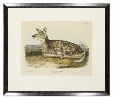 View 2. Thumbnail of Lot 494. Common American Deer. Fawn. (Plate LXXXI).