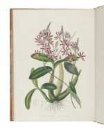 BATEMAN, JAMES | The Orchidaceae of Mexico and Guatemala. London: J. Ridgway & Sons for the author, [1837]-1843.