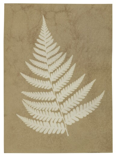 "TAYLOR, ALFRED SWAINE | Early ""photogenic drawing"" photograph of a fern, dated on the verso by Taylor, 2 December 1839"