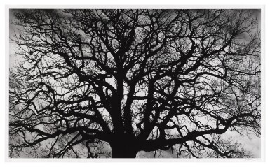 View 1. Thumbnail of Lot 102. Untitled (Tree).