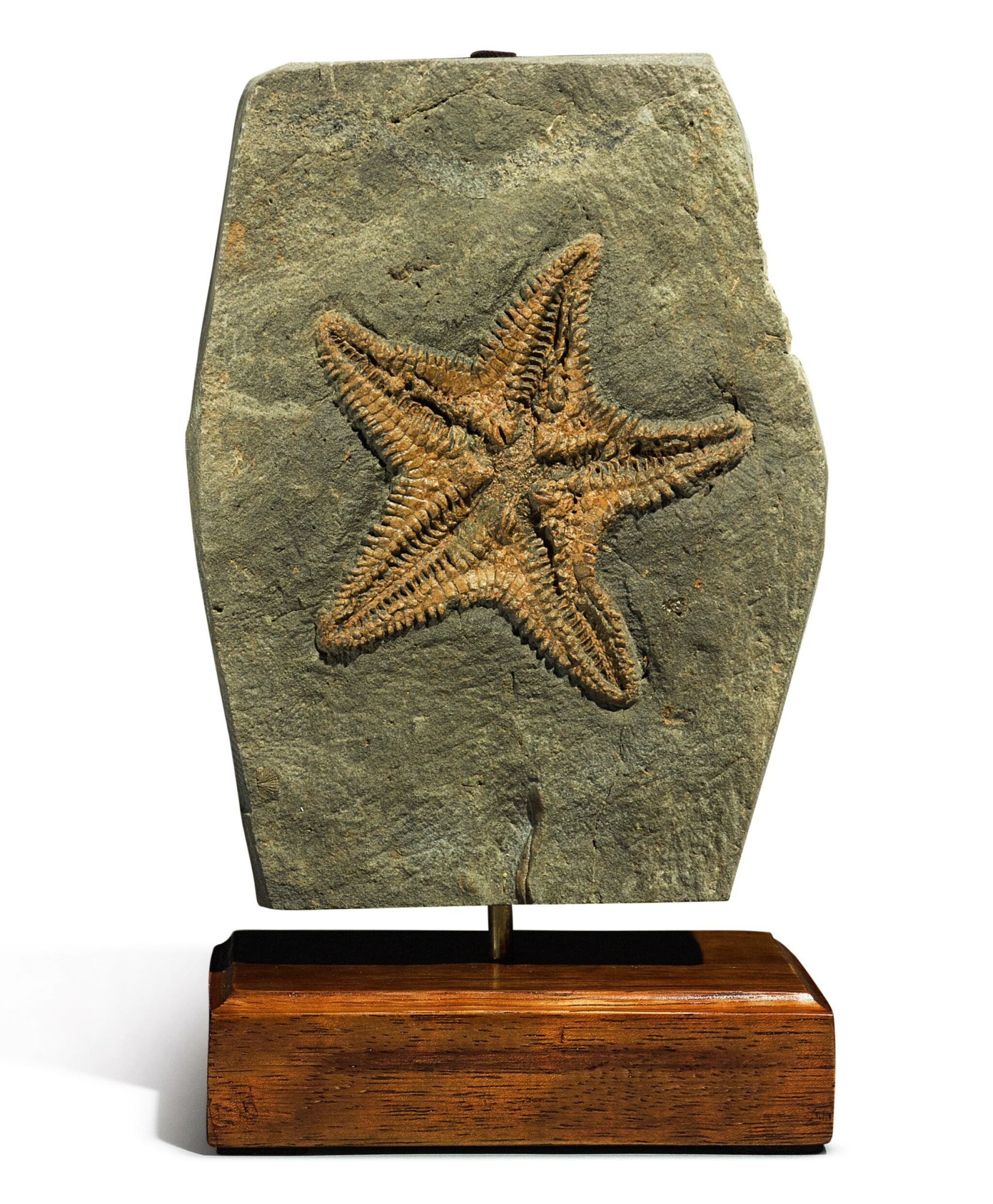 View full screen - View 1 of Lot 85. A RARE STARFISH FOSSIL.