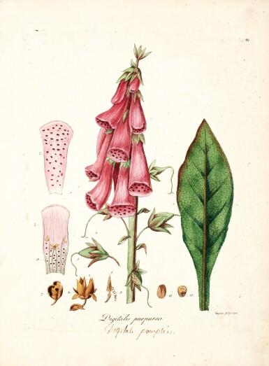 Dreves and Hayne | Choix de plantes d'Europe, 1802, 5 volumes