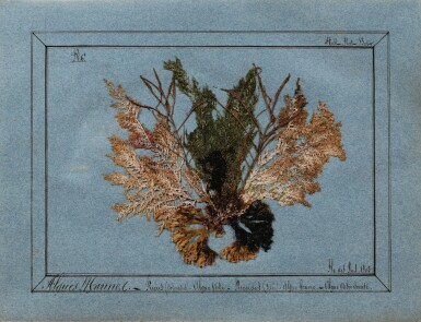 View 2. Thumbnail of Lot 89. ALGUIER. Ile des Pins (Nouvelle Calédonie). Album in-4 (couv. illustrée), 37 pl. in-4 et 2 pl. in-12..