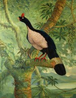 Hughes | Lord Derby's mountain pheasant, 1996, oil on canvas