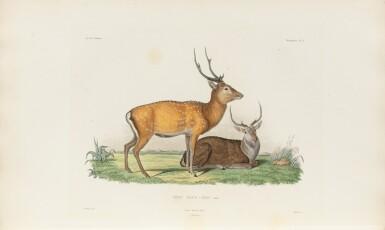 View 4. Thumbnail of Lot 216. VAILLANT. Voyage autour du monde... Paris, Arthus Bertrand, 1840. 16 vol. Reliure moderne, demi-veau..