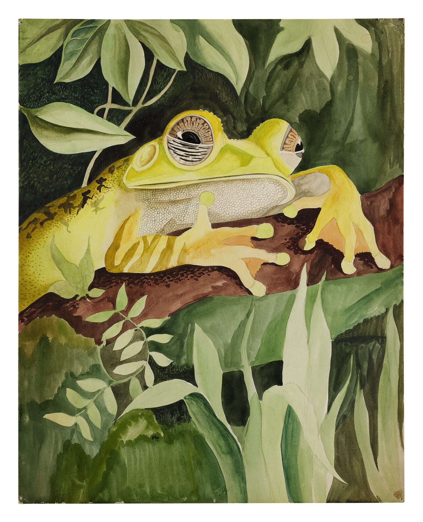 MAP TREE FROG